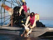Sea Animal Rescuers